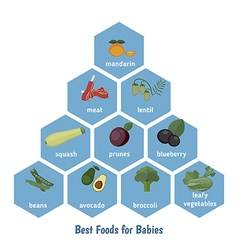Best foods for babies vector image