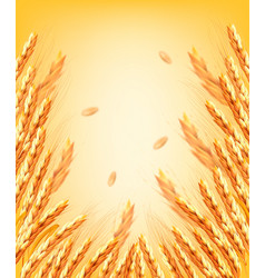 ears wheart and dried whole grains on yellow vector image