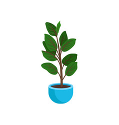 ficus elastic or rubber plant in bright blue vector image