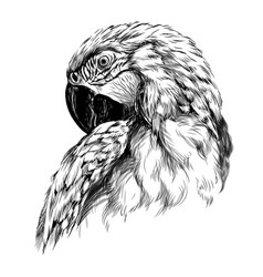 macaw parrot hand-drawn sketchy art portrait vector image