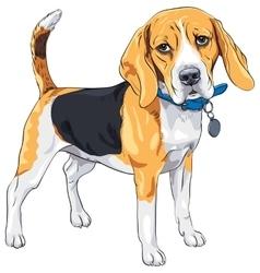 Sketch serious dog beagle breed vector