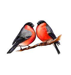 a pair of beautiful winter birds bullfinches on vector image