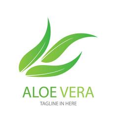 Aloe vera logo design template vector