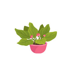 flat icon of viola plant in bright pink pot vector image