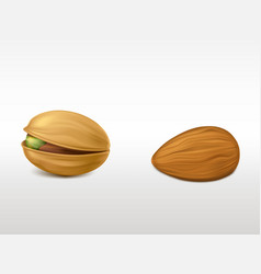 peeled almond and cracked pistachio with peel set vector image