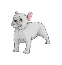 portrait of boston terrier dog in pose cute puppy vector image