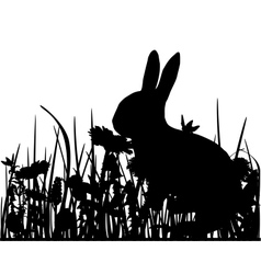 Rabbit in the meadow vector