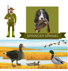 english springer spaniel vector image