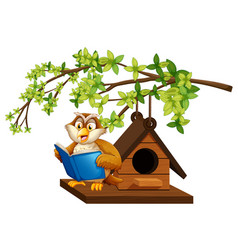 owl reading book by the birdhouse vector image