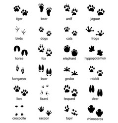 set footprints wild animals vector image