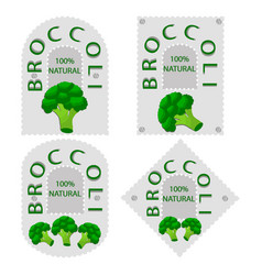 the broccolii vector image
