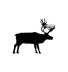 reindeer isolated on white background vector image vector image
