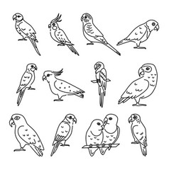 Set parrot icons in thin line style vector