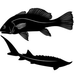 silhouette fish isolated on white background vector image