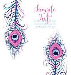 colorful peacock feathers vector image vector image