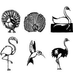 Group of Birds vector image