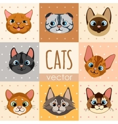 Set of eight colorful cartoon cat faces vector image vector image