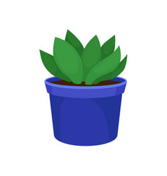 Houseplant in blue pot flat vector