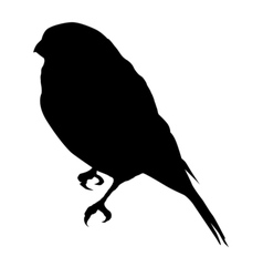 silhouette of sparrow vector image vector image