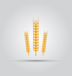 wheat isolated colored icon vector image