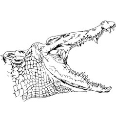 a large crocodile with an open mouth attacks vector image