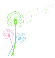 Colorful dandelion flowers with flying seeds on vector