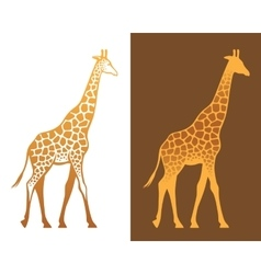 Giraffe with spots vector image
