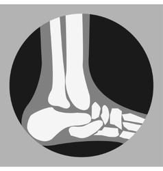 human Foot Bones vector image