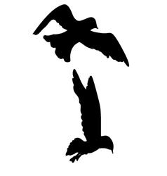 Seagull Bird Silhouette vector