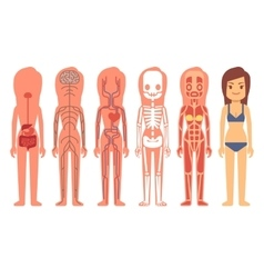 Medical woman body anatomy vector image vector image