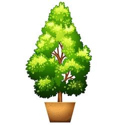 A plant on a pot vector