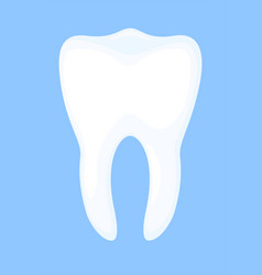 Colorful cartoon healthy tooth vector