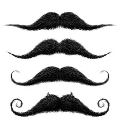 old fashion upper lip long wax groomed and trimmed vector image