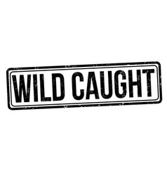 wild caught sign or stamp vector image