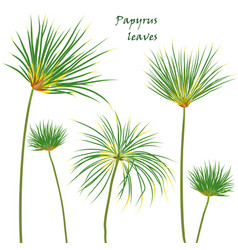 set tropical palm papyrus leaves realistic vector image