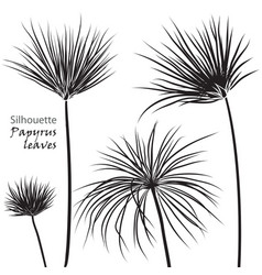 silhouette tropical palm papyrus leaves black vector image
