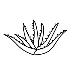 Aloe plant icon outline style vector