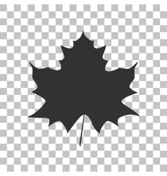 Maple leaf sign Dark gray icon on transparent vector