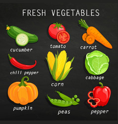 set fresh vegetables vector image