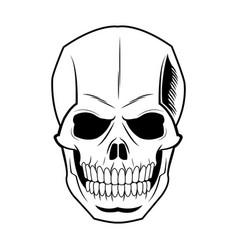 Skeleton of the human head vintage bone vector