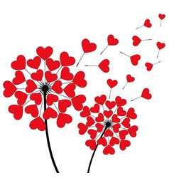 Two dandelion heart shaped on white vector