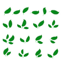 collection with green leaves in flat style for vector image