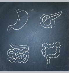digestive system icon sketch set on chalkboard vector image
