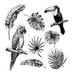 drawing set tropical leaves with birds toucan vector image