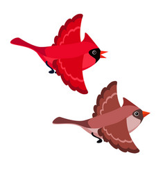 Flying cardinals isolated on white background vector