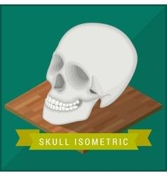 Human skull flat isometric Cranium vector