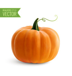 realistic orange pumpkin vector image