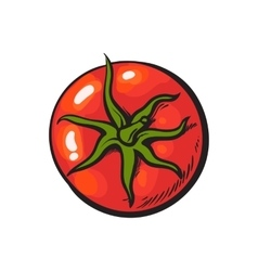 Sketch style drawing of shiny ripe red tomato top vector image
