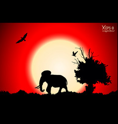 Red sunset in the jungle with old tree birds and vector