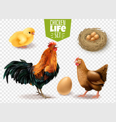 Chicken life transparent set vector